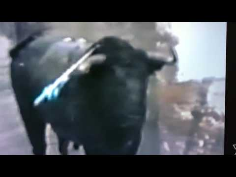 Bull v Animal rights activist