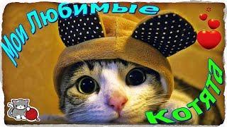Приколы с кошками  Подборка смешных кошек  Интересные видео с котиками.