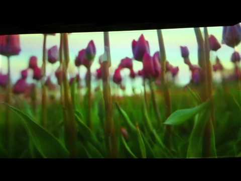 Pipilotti Rist artist/video art