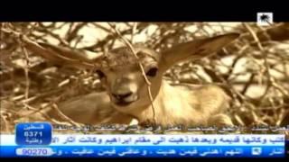 شقول يا أهل الهوى - أحمد القرعاوي - قناة القصيم