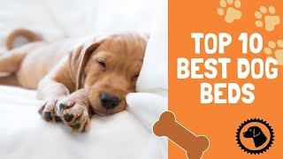 Beds to Ensure Your Dog Sleeps Sound | DOG PRODUCTS 🐶 Brooklyn's Corner