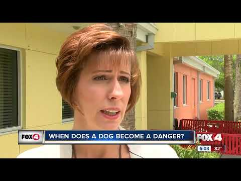Dog attack on 4-year-old caught on camera