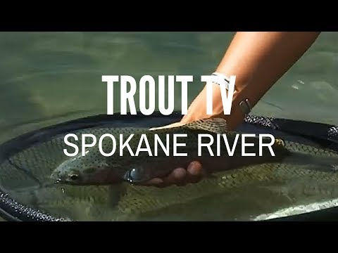 Trout TV - Spokane River Fly Fishing