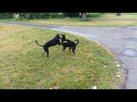 Stray dogs in a playful mood !
