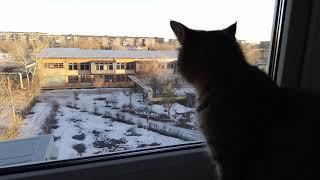 Кошка смотрит в окно