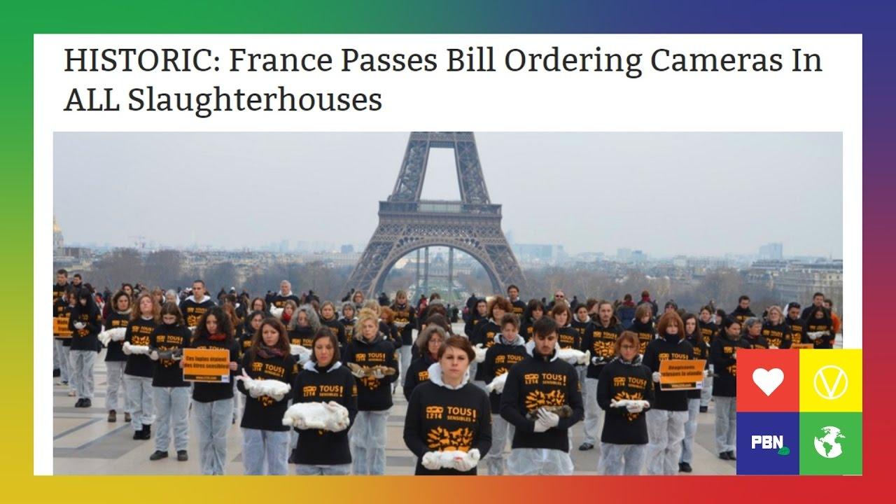 HISTORIC Vegan News: SLAUGHTERHOUSE CAMERAS In France