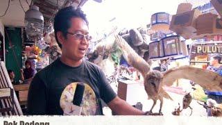 BIRD MARKET : Burung Hantu Lucu Di Pasar Hewan Splendid Malang