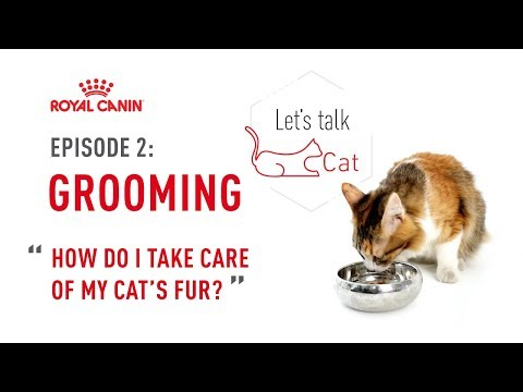 Let's Talk Cat   Ep 2: How To Take Care Of My Cats Fur?