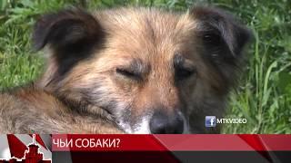 За последние три недели в мэрию Магадана поступило четыре жалобы на собак.