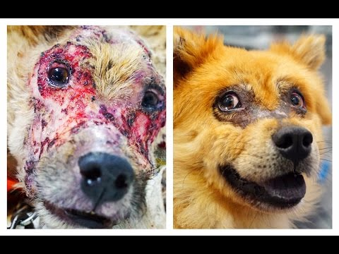 DOG CHASED BY PEOPLE BECAUSE HE LOOKED LIKE A MONSTER TURNS INTO A REAL BEAUTY !  Please Share