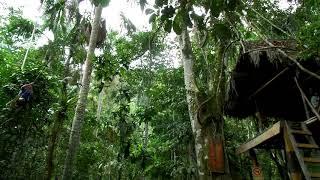Download Video Tarzan X MP3 3GP MP4