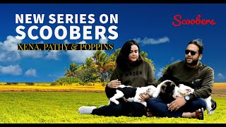 New Series on Scoobers ! Presenting Xena- The Akita and Poppins & Patchy- AMStaff Sisters.