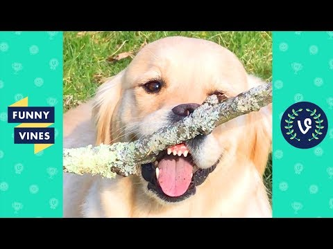 TRY NOT TO LAUGH - Funny Pet Videos of the Week!