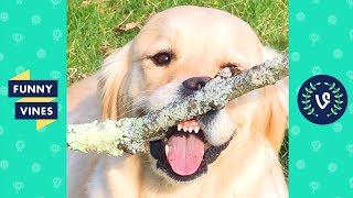 Download TRY NOT TO LAUGH - Funny Pet Videos of the Week! MP3 and video free