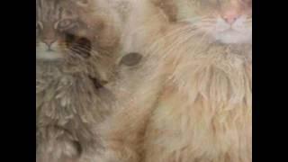 Красивые картинки котов