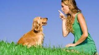Dog Training | Awesome Bike & Obedience Dog Training Video