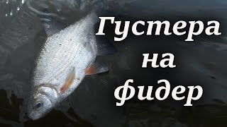 Густера на фидер. Супер рыбалка на реке Десна(Недавно состоялась ещё одна фидерная рыбалка возле паромной переправы. Как обычно, я приехал очень рано..., 2016-07-22T19:55:47.000Z)
