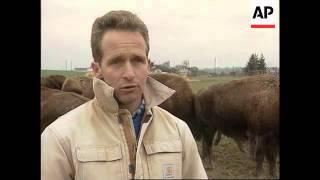 Switzerland - Swiss Ranchers Farm Bison