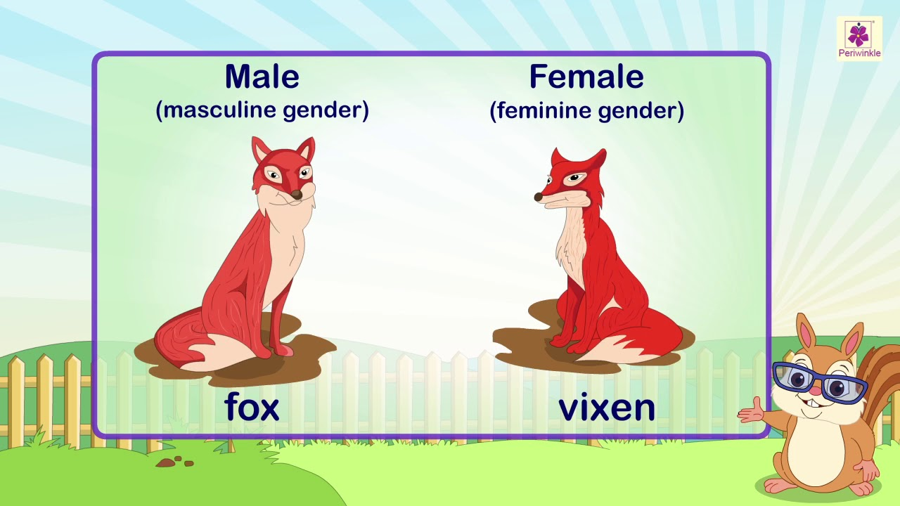 small resolution of Nouns: Gender   English Grammar   Grade 3   Periwinkle - YouTube