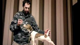 Урок 1: Как поставить собаку в стойку