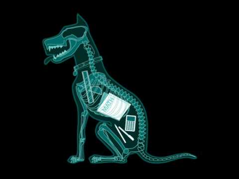 Image result for dogs x-ray