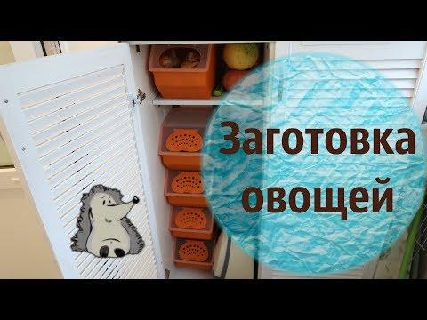 Хранение овощей морковь, перец, лук, свекла