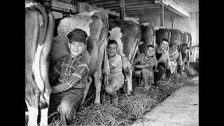 La vie à la ferme : photos anciennes / musique LE BRISE PIEDS