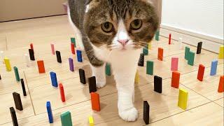 運動音痴の猫でも障害物を倒さず通れるのか検証してみたら意外な結果に!