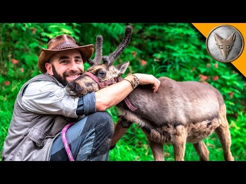 Thumbnail: Baby Reindeer Loves Hugs!