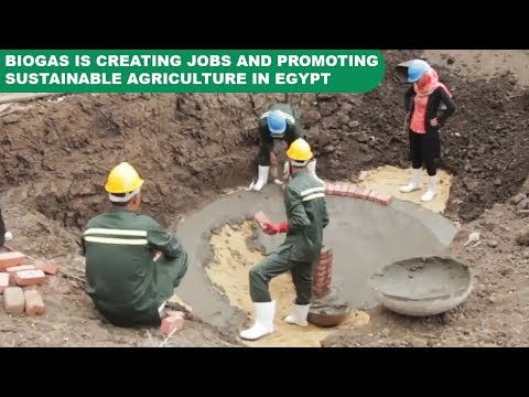 How biogas is creating jobs and promoting sustainable agriculture in Egypt