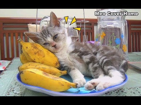 Funny Cat Sleep In To Banana   Cats And Banana 2018   Meo Cover Home