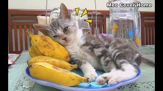 Funny Cat Sleep In To Banana | Cats And Banana 2018 | Meo Cover Home