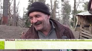 Gli ultimi pastori del Partenio, un mestiere sul filo di ... lana - Lo Speciale