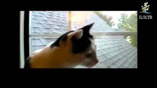 FANNY CATS Смешные коты Кошки разговаривают Забавные кошки Кошки мяукают
