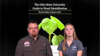 Ohio State University Guide to Weed Identification iBook Into Video