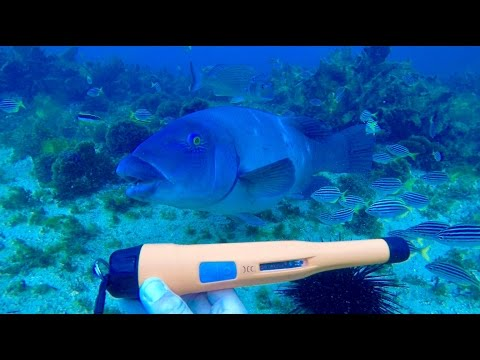 Deteknix Xpointer Pro 🎁 Found Ocean treasure, Metal Detecting 👍🏻