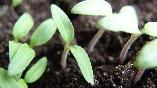 Почва для рассады. Как самому приготовить почву для рассады огурцов
