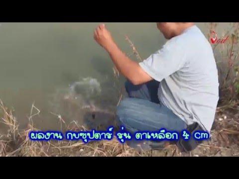 ตกปลาช่อนEPตีคอกปลาช่อนนาน้ำท่วมBY Yod911