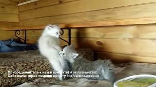 Котята - бои без правил | Cчастье и позитив в приюте Дари добро