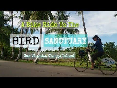 OLANGO ISLAND: Bird Sanctuary