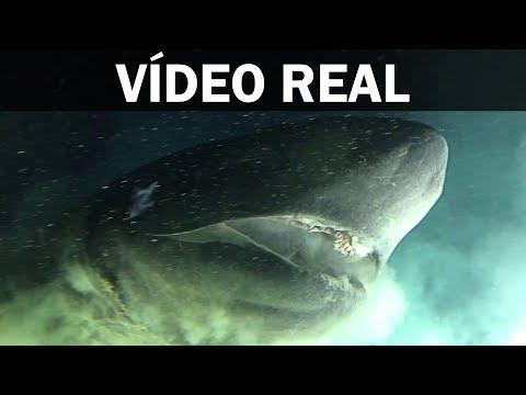 Graban un tiburón prehistórico con 200 millones de años de antigüedad
