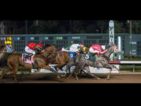 Los Alamitos Equine Sale Weekend 2017