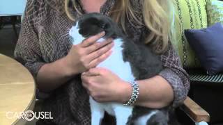 Как стричь коту когти