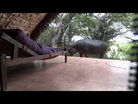 Hippo encounter at Grumeti Serengeti Tented Camp - Tanzania