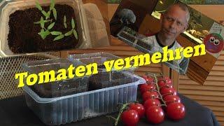 Tomaten durch eigene Samen vermehren, geht das? Ja