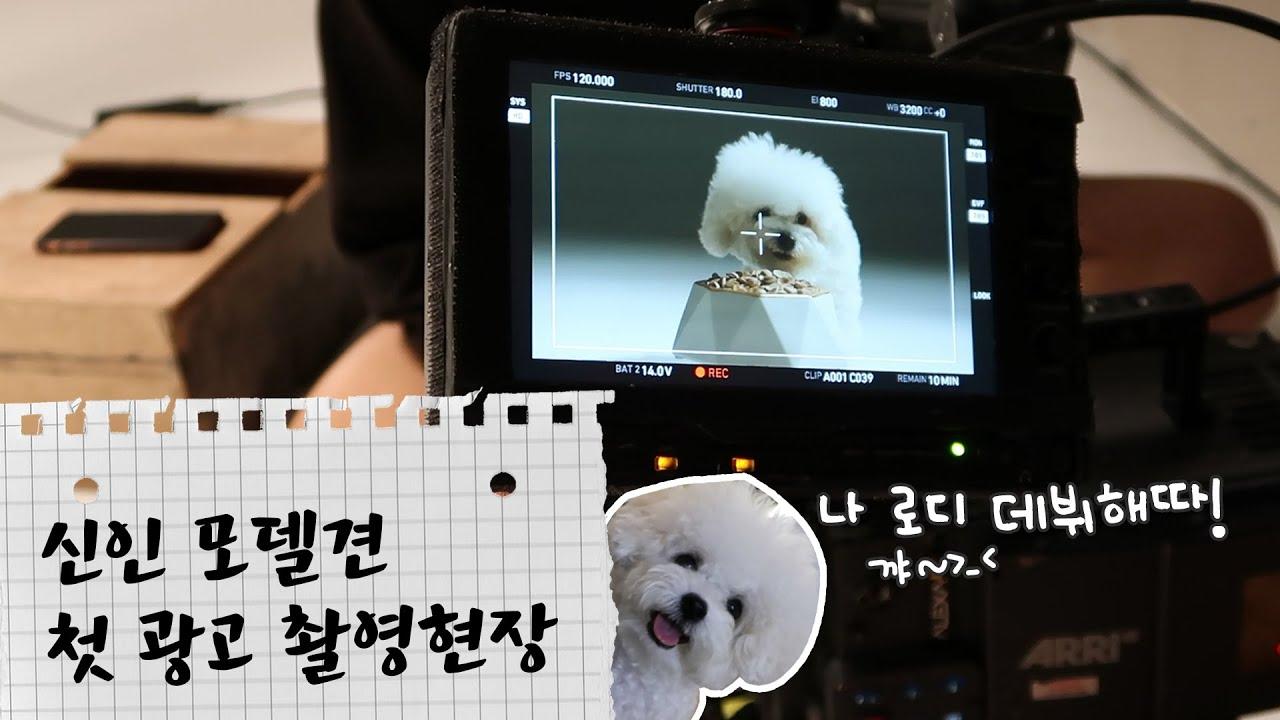 울 아들램 로디 드디어 사료값을 하다!🙌 신인 모델견 광고 데뷔 현장🎬 [듀자매] | dewsisters
