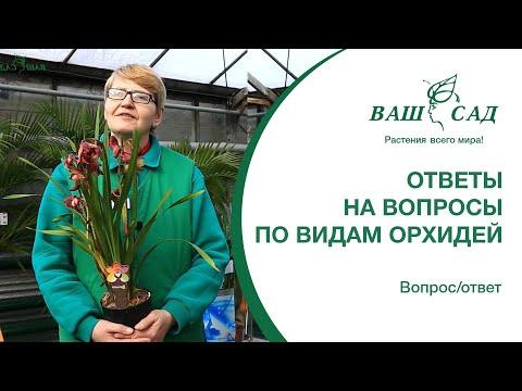 Отвечаем на вопросы: Цимбидиум, Дендробиум, Дендробиум фаленопсис Ваш сад