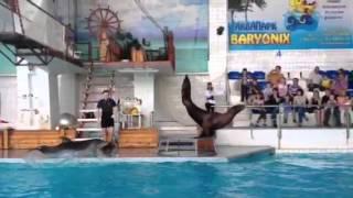 Дельфиненок мешает выступлению морского льва