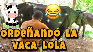 Ordeñando las vacas de la tía canda 😄😄 El Salvador UHD