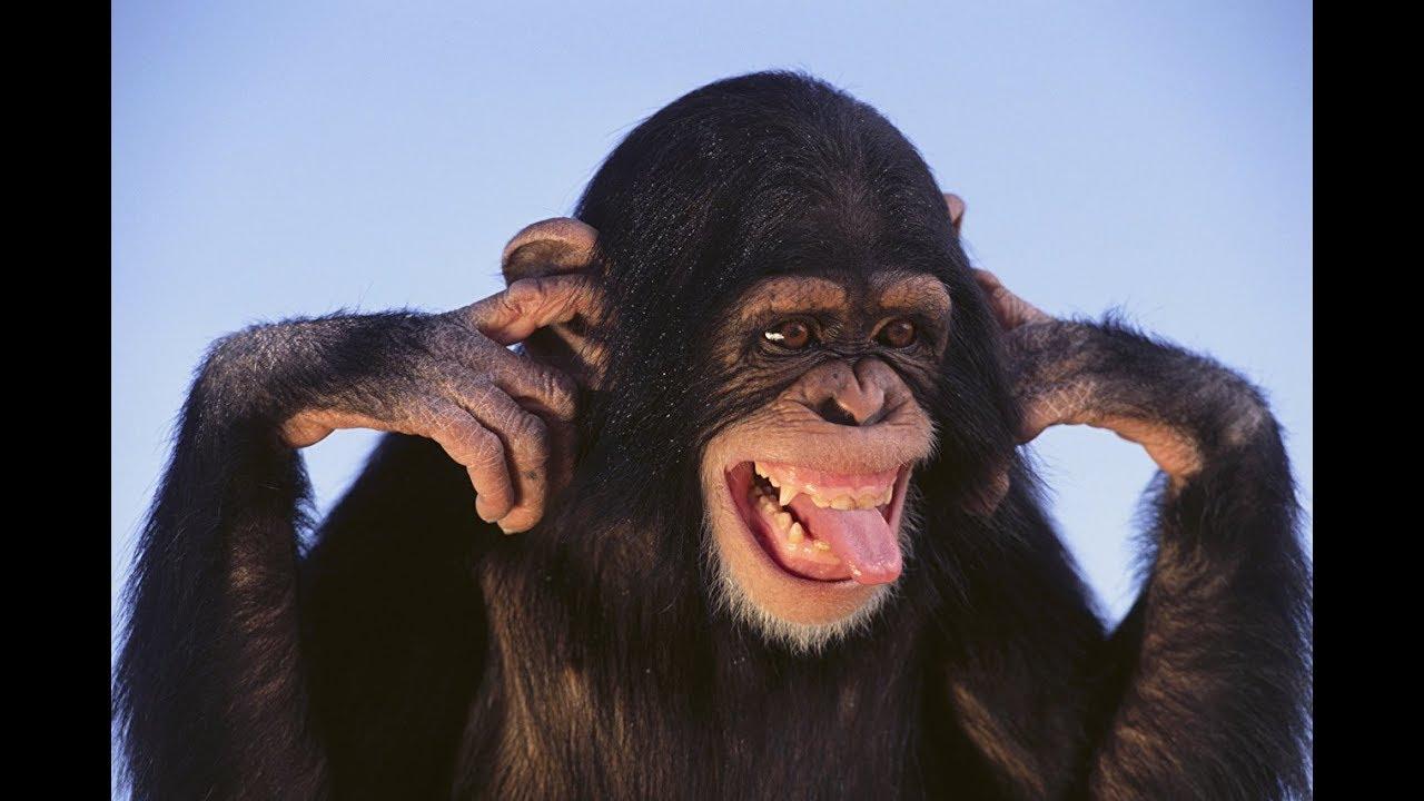 Картинки прикол обезьянок, открытки немецкие идея